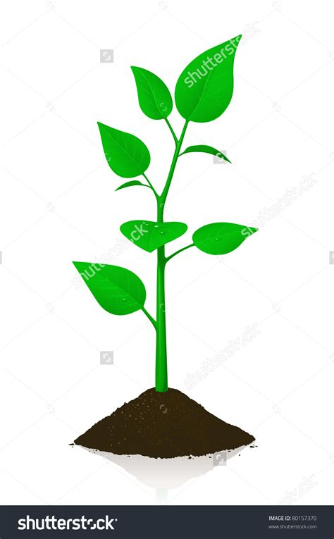 small tree clipart   cliparts  images