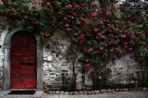Scarlet Letter Bush The Scarlet Letter Symbols The Scarlet Letter