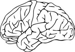 brain color brain clipart coloring pages to print