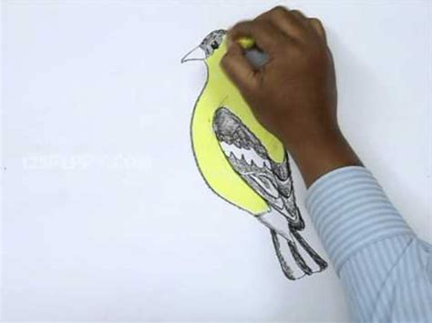 how to draw a goldfinch how to draw american goldfinch