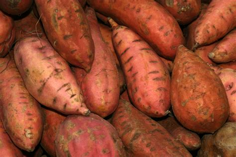 growing sweet potatoes bonnie plants