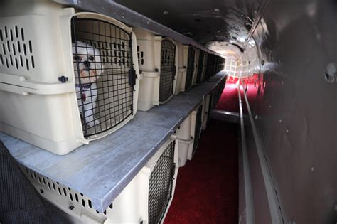 Delta Airlines Pets In Cabin by Pet Airways Takes Flight