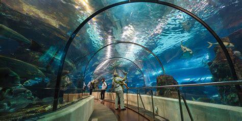 entradas aquarium barcelona ofertas hotel entradas aquarium barcelona