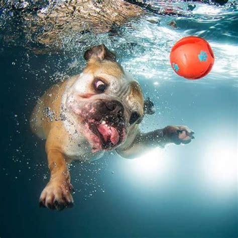 imagenes de juegos impresionantes 30 impresionantes fotos de perros bajo el agua taringa