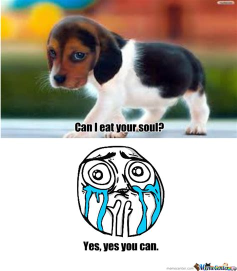Cute Puppies Memes - cute puppy by mkaism492 meme center