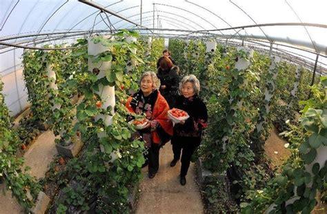 zucchine coltivate in vaso coltivare fragole alberi da frutto come coltivare le