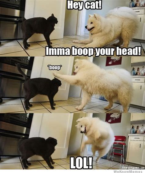 Boop Meme - hey cat imma boop your head weknowmemes
