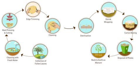 Areca Palm eco friendly areca leaf plates manufacturing process