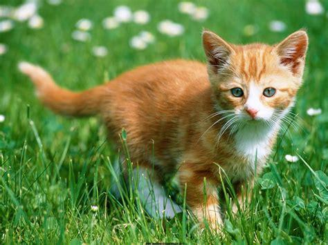 imagenes de animales no conocidos los mejores animales animales dom 233 sticos