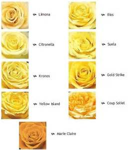 names for pale yellow names for pale yellow home design