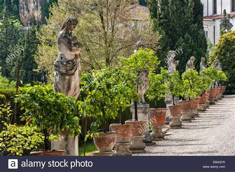 Vicenza Stock Pot villa trissino marzotto vicenza italy lemon trees in