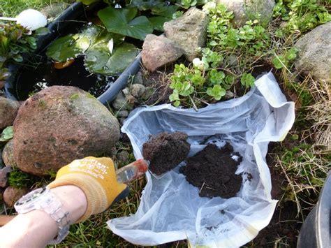 Welche Pilze Wachsen Im Garten Auf Der Wiese by P1010267 Phlora De