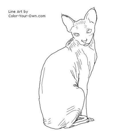 Sphynx Cat Coloring Page | free coloring pages of sphynx