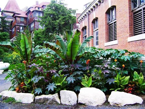 Landscaping Ideas For Small Backyard The Abyssinian Ensete Banana Cousins Shown Here