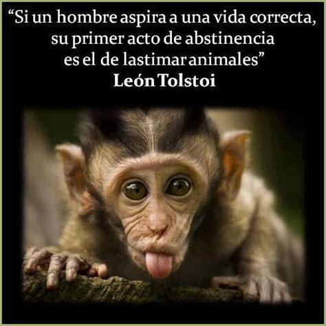 imagenes para reflexionar de animales frases e im 225 genes graciosas con animales para compartir y