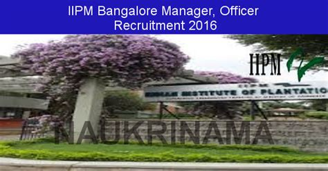 Iipm Executive Mba Placements by Iipm Bangalore Recruitment 2016 Manager And Others Posts