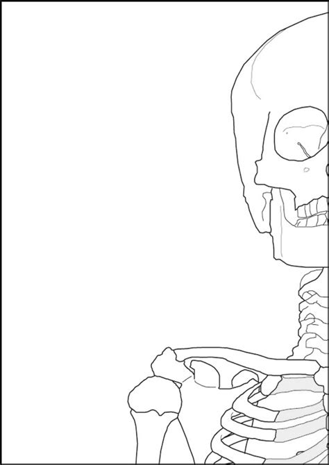 zerbino umano poster corpo umano anatomia pannelli decorativi plexiglass