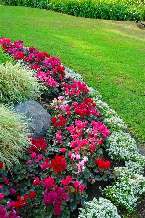 Garden Flower Beds Flower Bed Border Ideas Alyssum Begonia And Ornamental Grass Great Color Combination