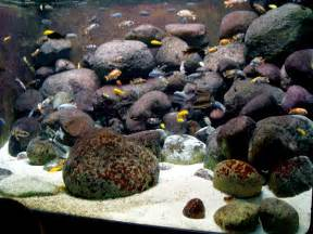 Your world how to set up and aquascape a proper cichlid habitat