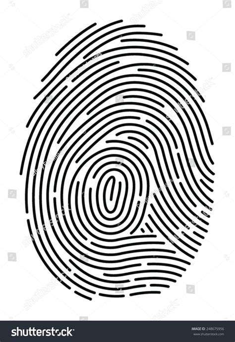 fingerprint template semi simplified fingerprint on white background stock