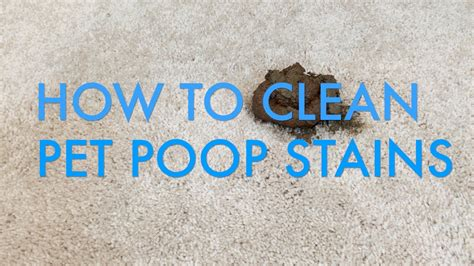 how to clean diarrhea from couch cleaning dog diarrhea from carpet images cleaning dog