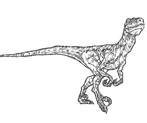 coloring pages velociraptor jurassic park raptor coloring pages coloring pages