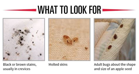 Bed Bugs What To Look For by How To Check For Bed Bugs In Hotel Rooms And Other