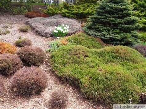 shrubs for flower beds 15 garden design ideas flower beds and evergreen
