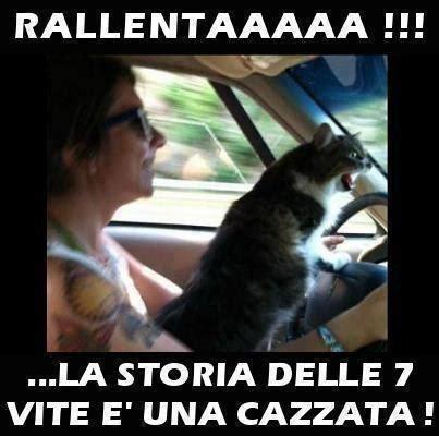 donne senza niente addosso al volante barzellette net foto donna guida con un gatto