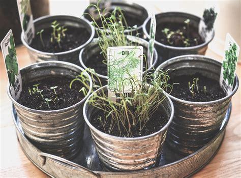 raccolta delle erbe consigli  luso  la conservazione