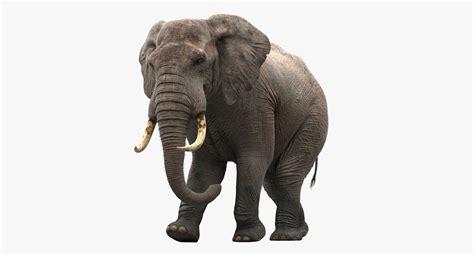 Best Finder Search Elephant Finder Travian Script Best Elephant 2017