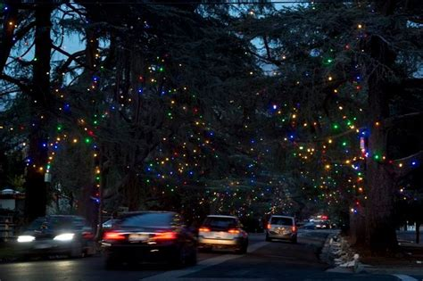 san marino xmas tree lane how the trees of altadena s tree were saved in time for