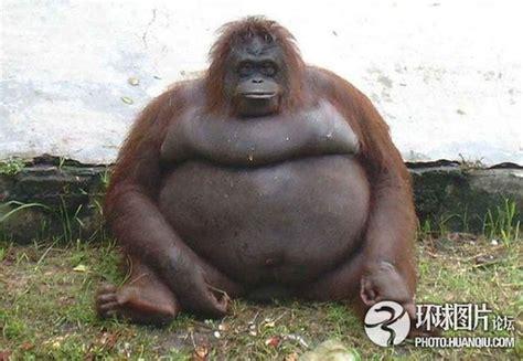 imagenes de animales gordos los animales m 225 s gordos del mundo spanish china org cn 中国最