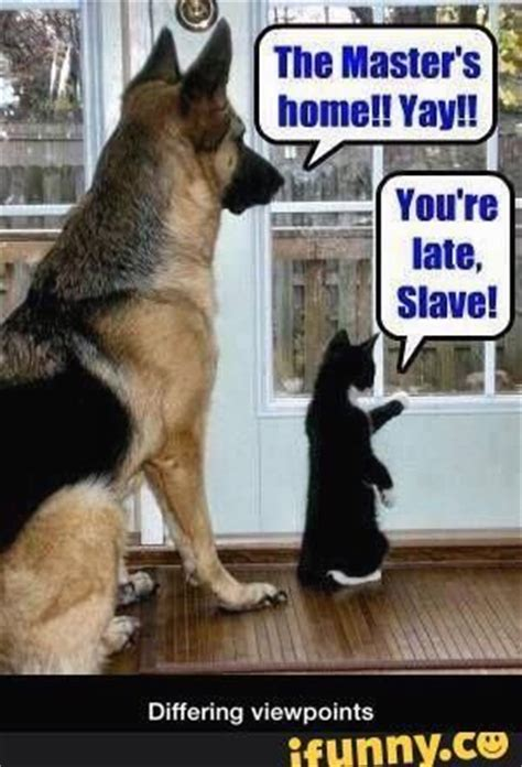 Dog And Cat Memes - best 50 funny cat vs dog memes images to prove who s boss