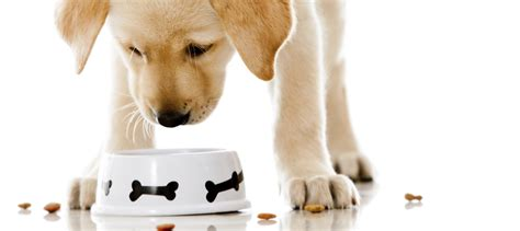 puppies food the health benefits of choosing your food wisely modernist
