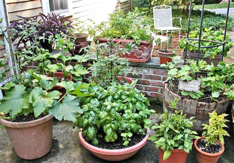 Pot Gardening Vegetables Tips For Growing Vegetables In Containers