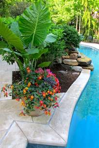 25 best ideas about plants around pool on