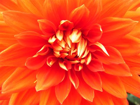 Orange Flowery seven pictures to re energise you and your chakras