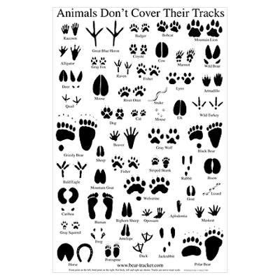 printable animal track guide 13 best images about animal tracking unit on pinterest
