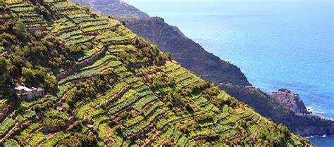 terrazzamenti liguri cinque terre i terrazzamenti alle cinque terre liguria