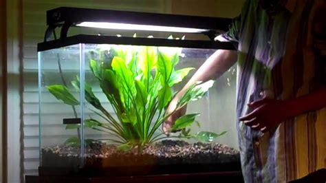 Aquascape Plant Planting A Mother Amazon Sword Youtube