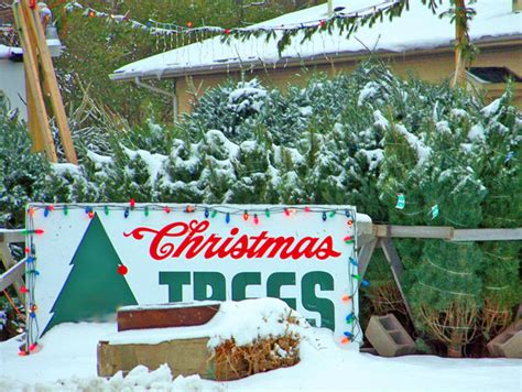 christmas tree lot free stock photo public domain pictures