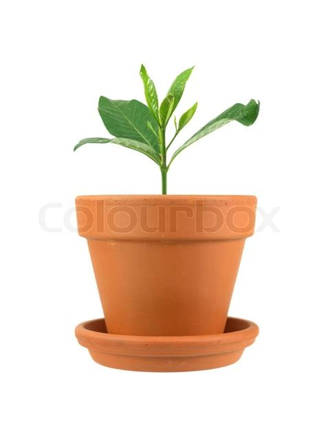small pot plants small pot plants 28 images plant in pot stock image