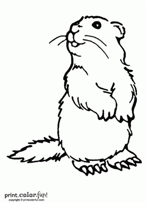 groundhog coloring page printable woodchuck coloring page print color fun