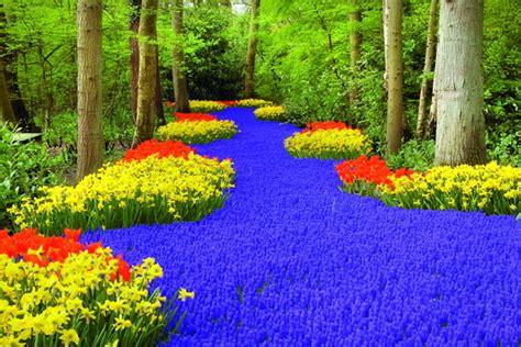gambar taman bunga tulip terbesar  dunia  keukenhof