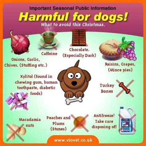 what not to feed dogs what not to feed your the holidays