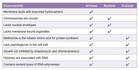 archaebacteria vs eubacteria venn diagram archaea versus eubacteria bioninja