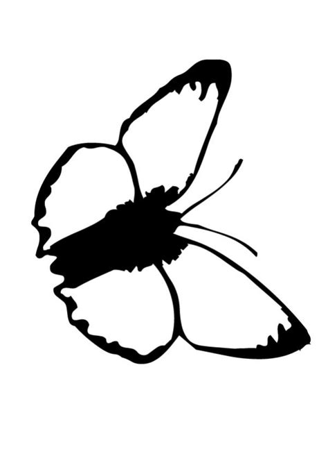 black and white coloring pages of butterflies butterfly coloring pages black and white butterfly