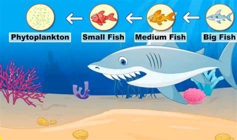 la cadena alimenticia food chain http www turtlediary - Cadenas En English