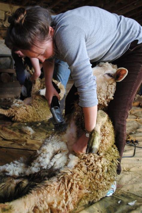Alat Cukur Bulu Domba jual alat cukur bulu domba elektrik manual jerman